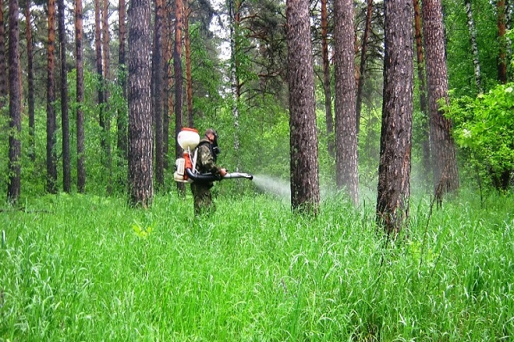 Обработка от клещей лесных массивов в Ставрополе